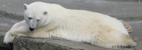 polarbearwm